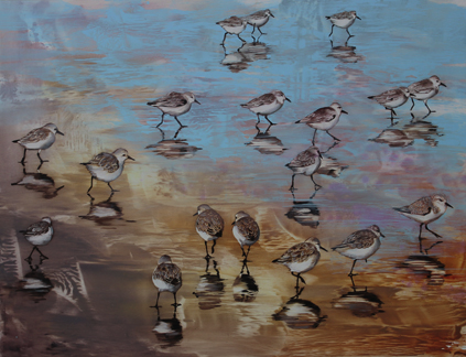 'snowy plovers' 18x23.5 oil on aluminum
